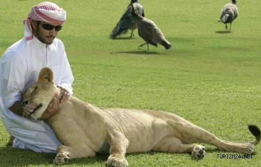 Arap şeyhlerine uzun süreli kiralamaları sağlayacak sistem